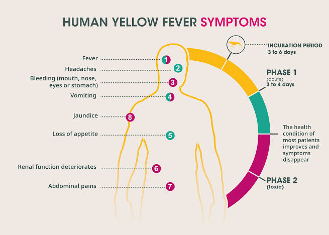 YELLOW FEVER OUTBREAK IN NIGERIA BY PHARM. NONYE | HealthGist.Net